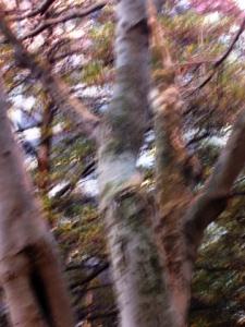 Trees (08 Jul 10)