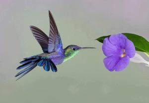 eco-designer hummingbird