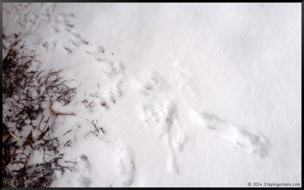 angel wings in snow